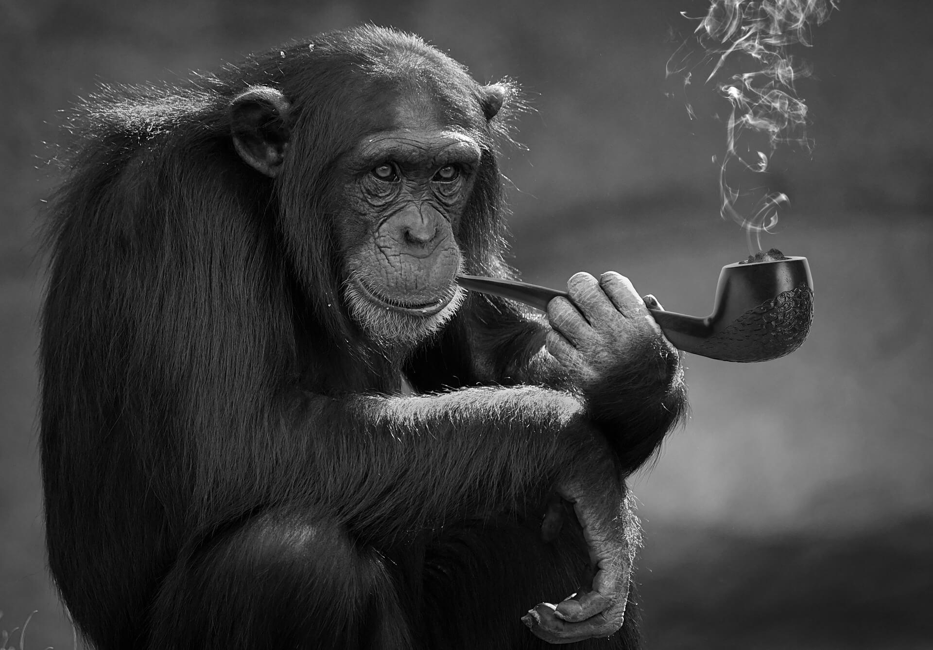 禁煙~煙草をやめる