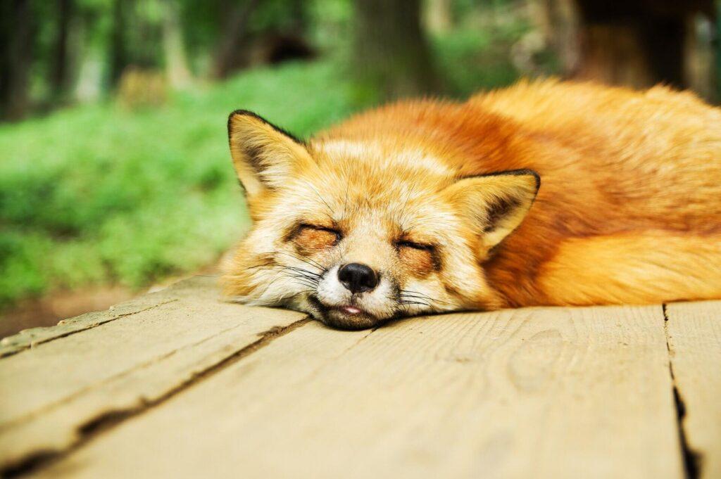 リラクゼーション~ストレス緩和~(誘導瞑想)
